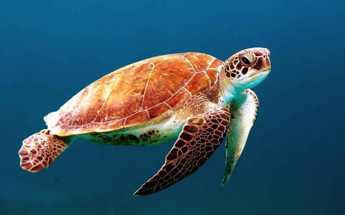 turtle-863336_1280_ok