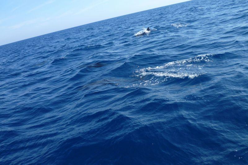 delfini1-1