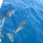 delfini, golfo dei poeti con mureadritta.net