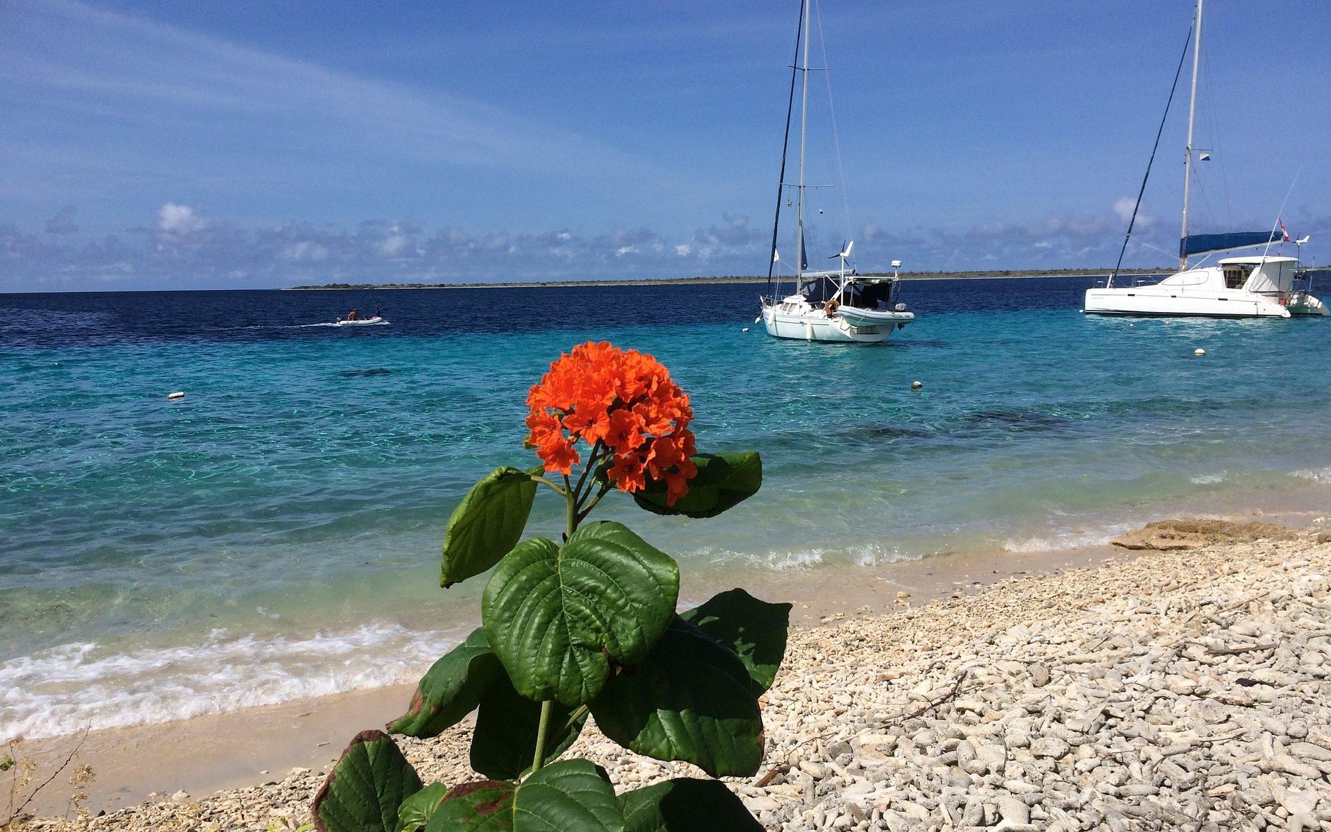 primavera barca fiore